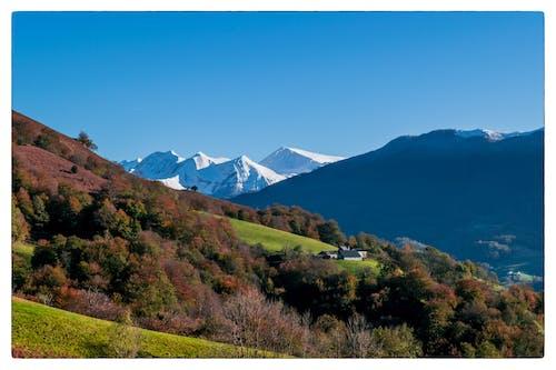 Kostnadsfri bild av 64, automne, betalar baskiska, couleur