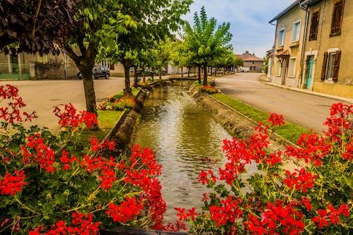 Fotos de stock gratuitas de arbre, canal, fleurs, geranios