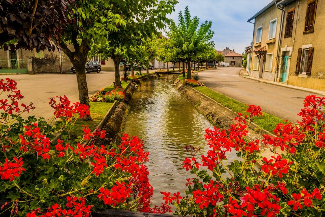 arbre, canal, fleurs