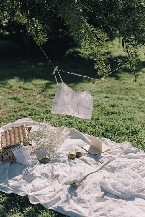 ピクニック, ピクニック毛布, ブラジャーの無料の写真素材