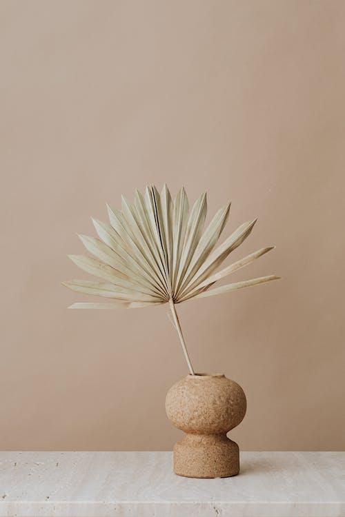 棕榈叶, 植物群, 極簡主義 的 免费素材图片