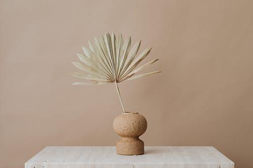 Foto stok gratis bejana, daun palem, dekorasi