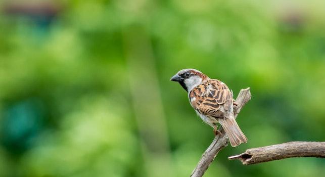 Free stock photo of nature, bird, animal, blur