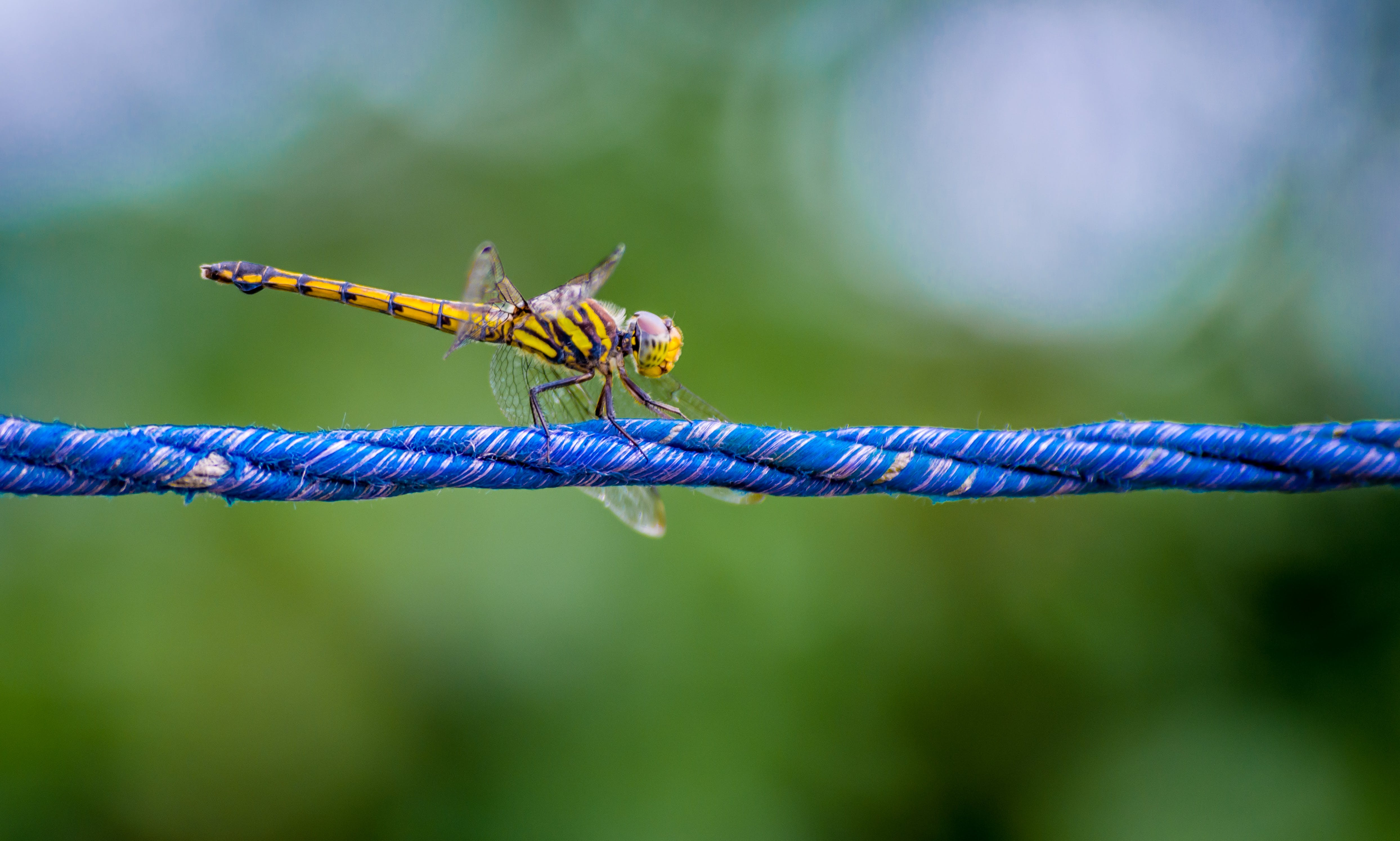 Macro Photography of a Dragonfly