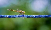 nature, rope, blur