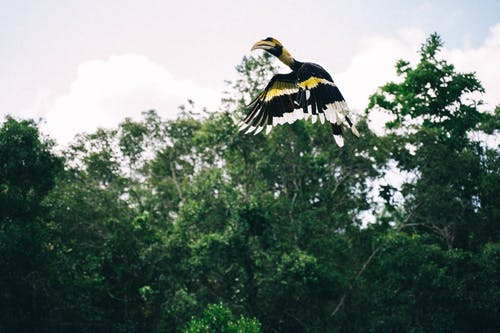 Foto stok gratis bangsa burung, binatang, burung