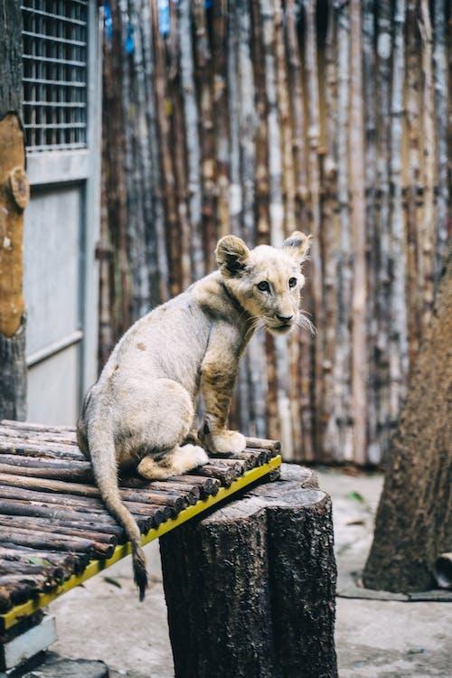 Kostnadsfri bild av djur, djurpark, gröngöling