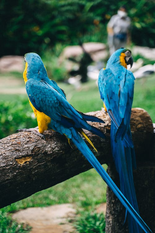 Blue Yellow and Green Macaw on Brown Tree Branch