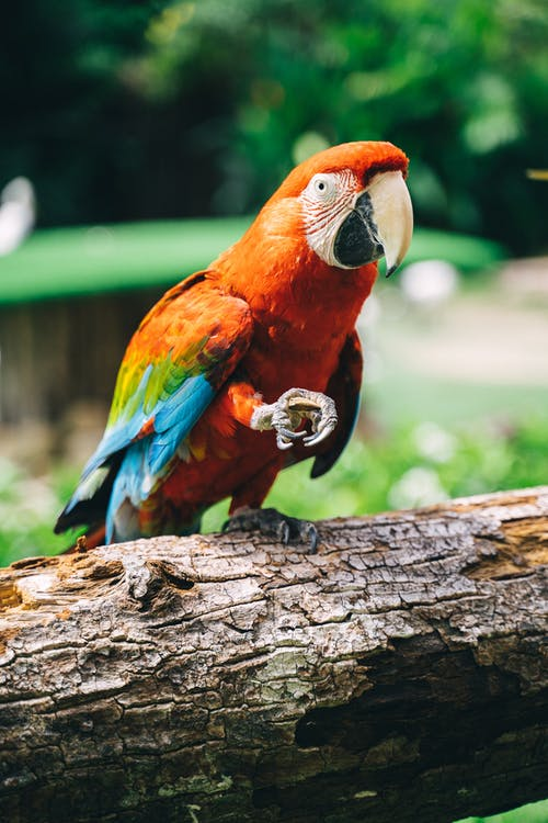Free stock photo of 4k wallpaper, android wallpaper, animal