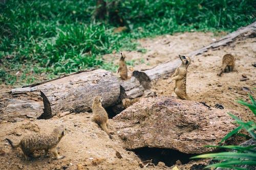 Základová fotografie zdarma na téma dav, divočina, divoká zvířata