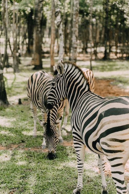 Kostnadsfri bild av däggdjur, djur, djurfotografi