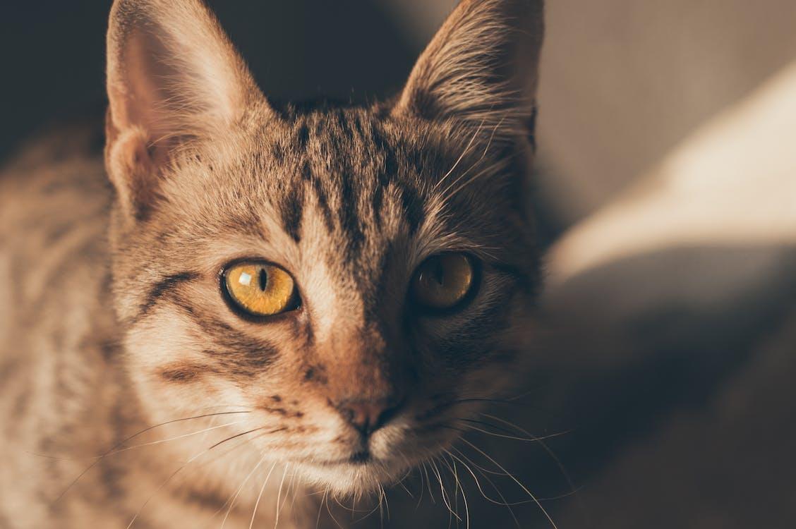 かわいい動物, かわいらしい, キティ