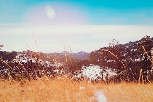 Gratis arkivbilde med åker, årstid, daggry, fjell