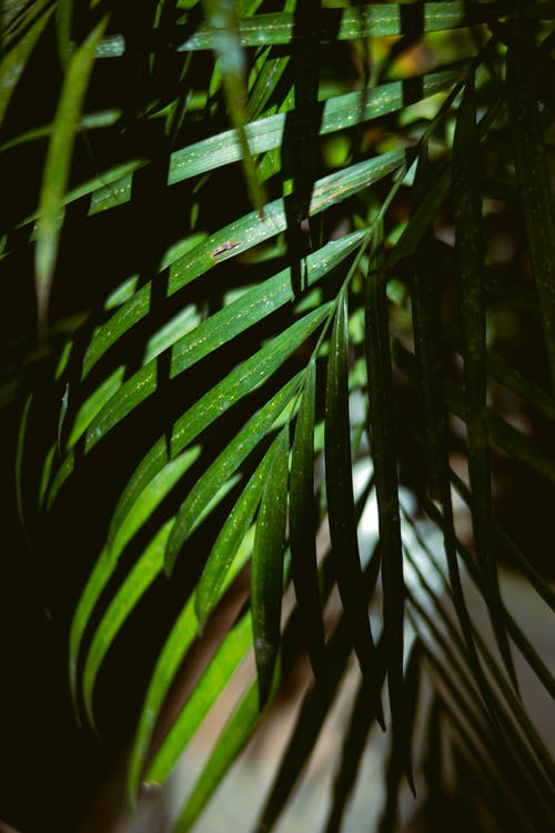 Green leaves of palm in sunlight