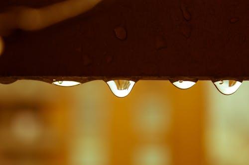 Kostenloses Stock Foto zu herbststimmung wald, launisch, nach dem regen, naturfotografie