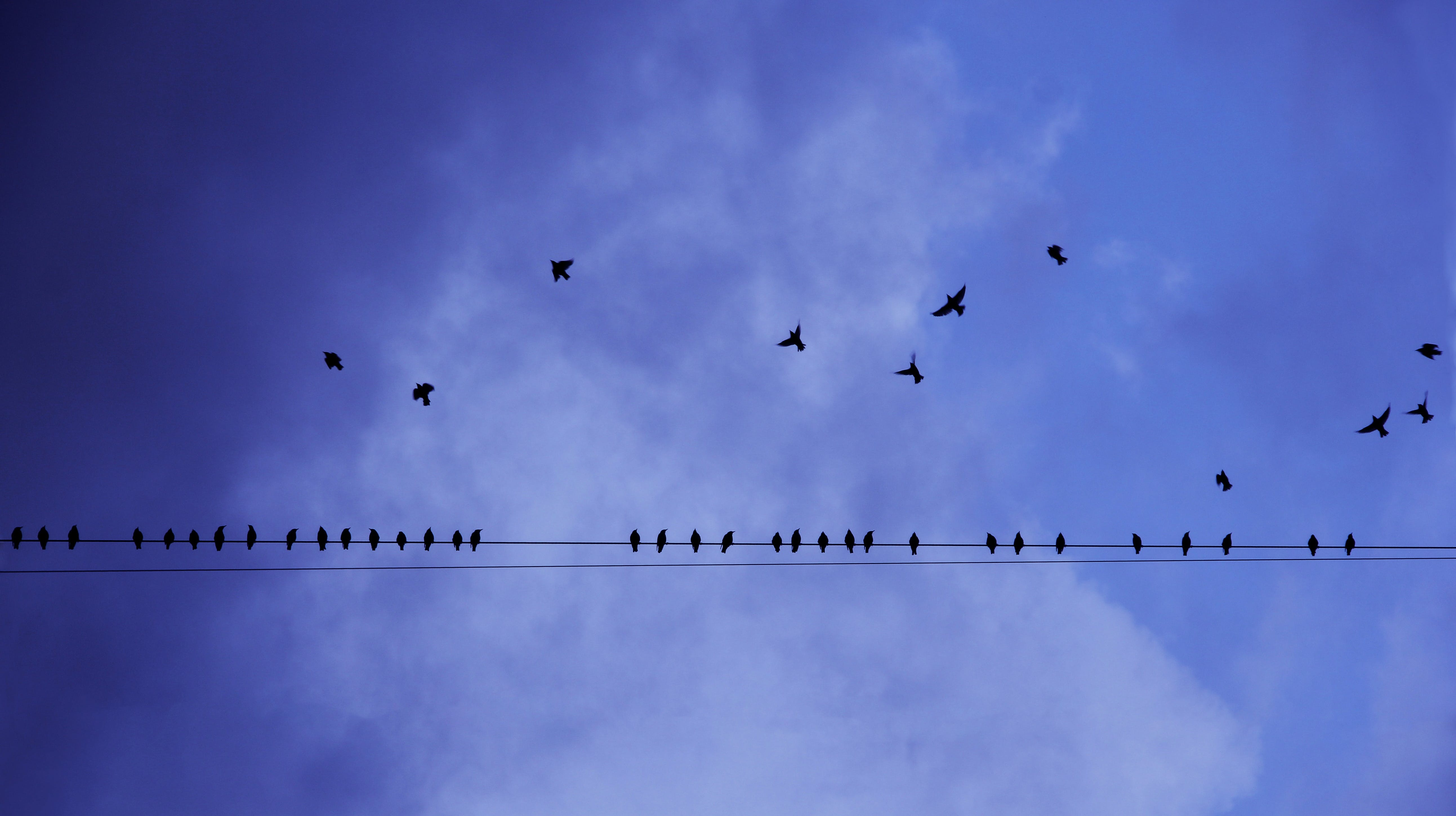 Silhouette Photography of Birds in Flight and Perched on Electricity Line