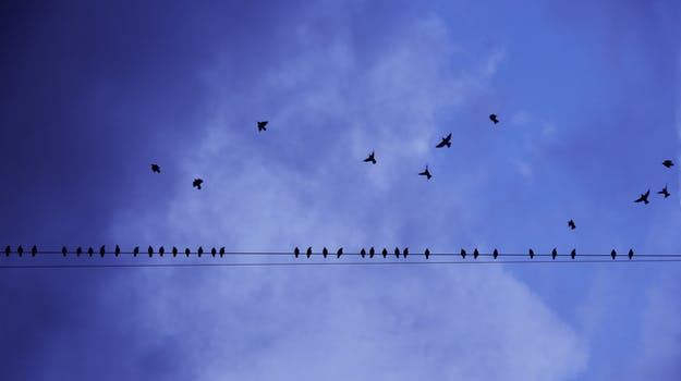 Flying Birds Free Stock Photos Download 3 416 Free Stock: V Formation Of Bird During Daytime · Free Stock Photo