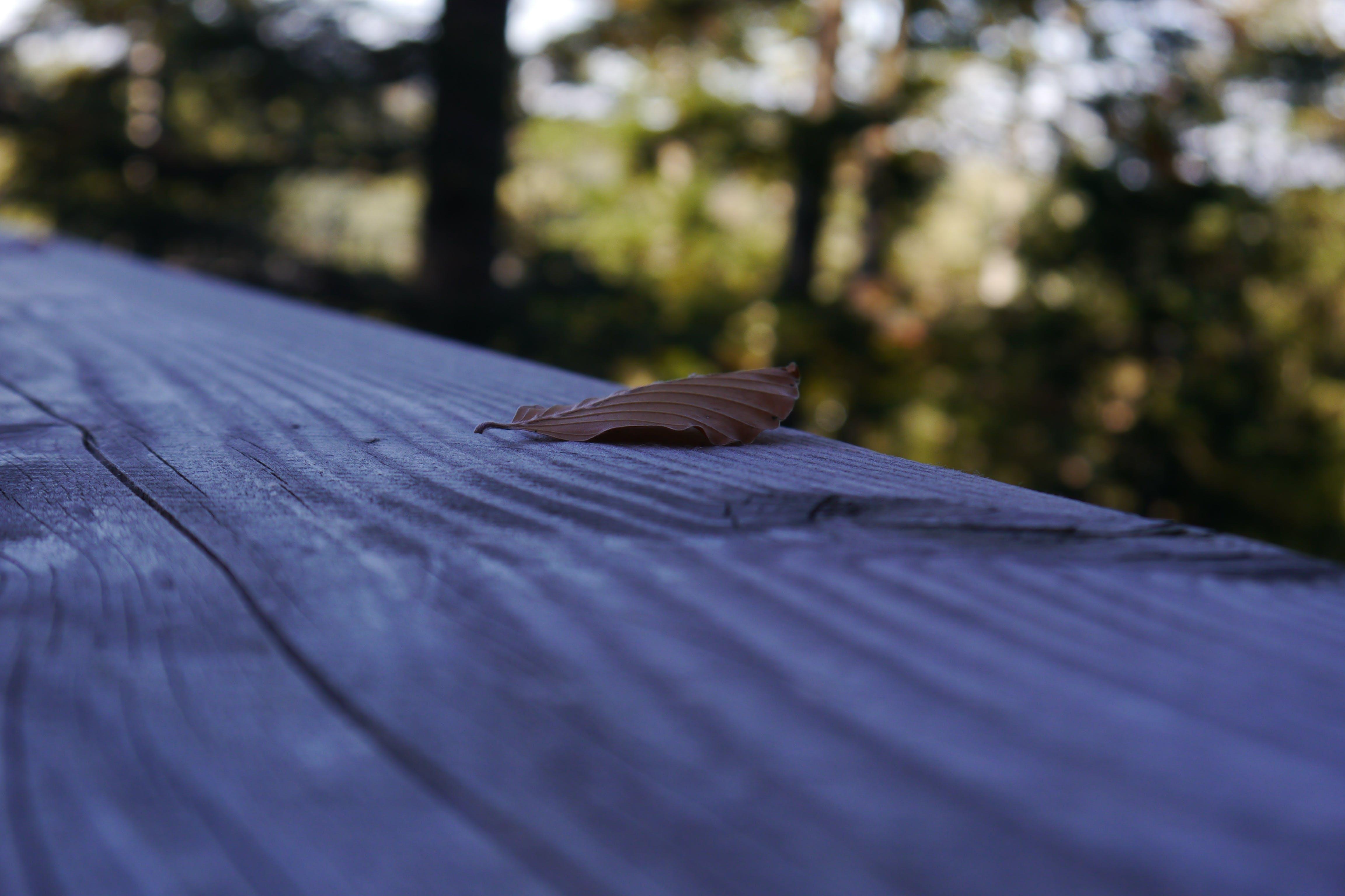 Free stock photo of autumn leaf, bokeh, nature, tree