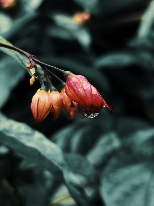 Immagine gratuita di autunno, bellezza nella natura, cadere