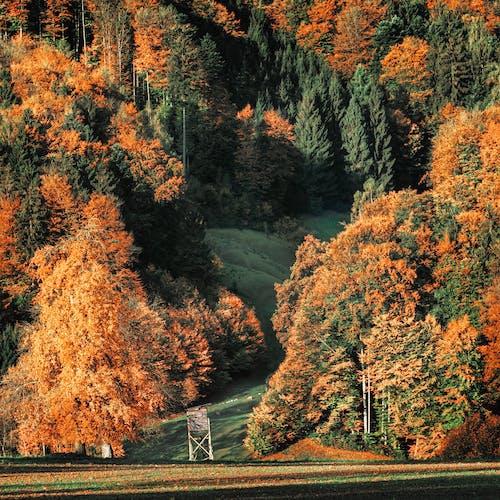 Ingyenes stockfotó erdő, fák, festői, fű témában