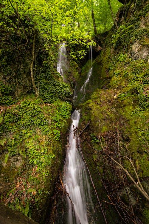 Foto d'estoc gratuïta de a l'aire lliure, aigua, arbre