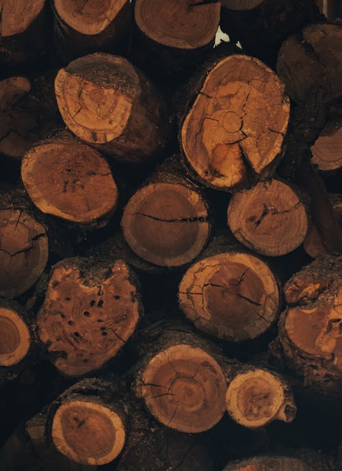 Felled trees placed in stack