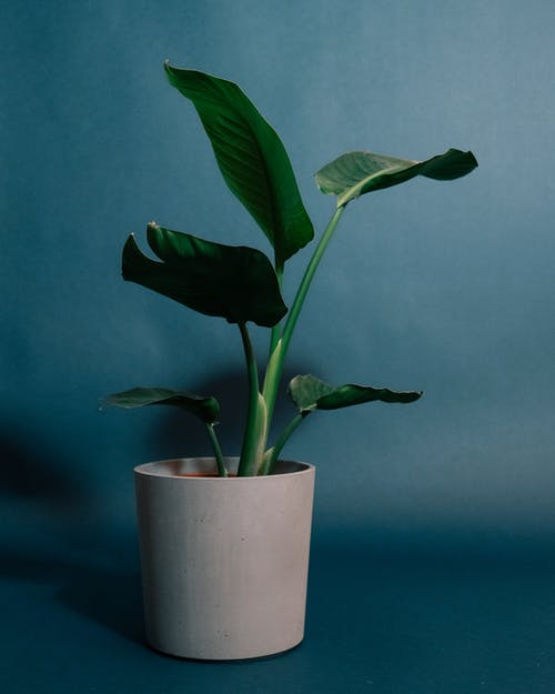 Green Plant on White Ceramic Pot