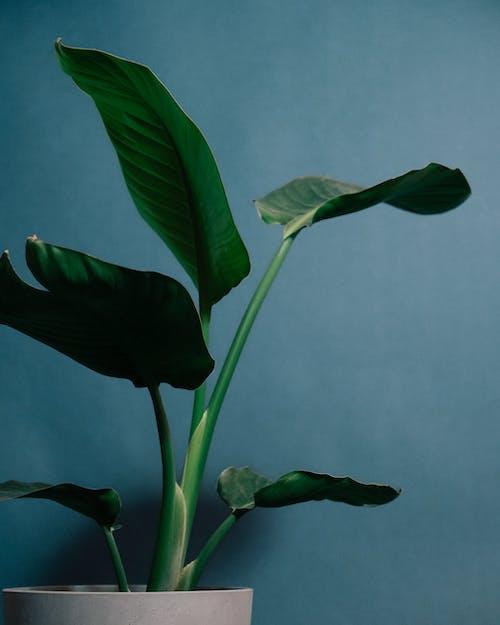 Kostnadsfri bild av biologi, blå bakgrund, blad