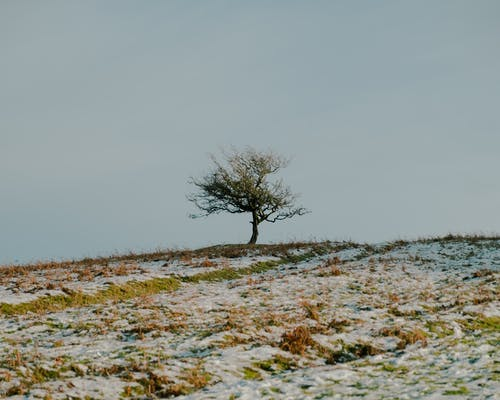 Lonely tree on hilltop in grassy meadow