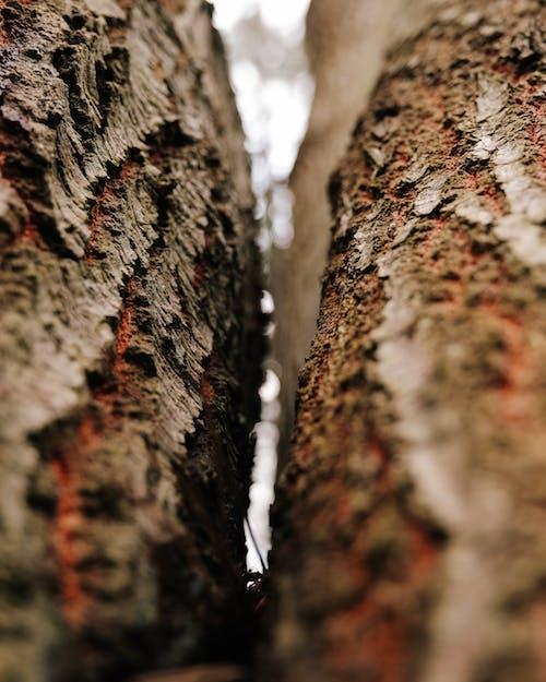 Kostnadsfri bild av abstrakt, bark, färg