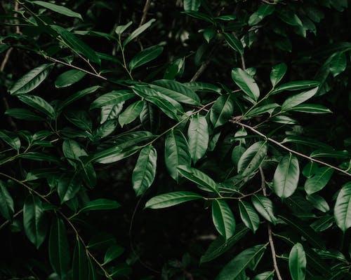 Kostnadsfri bild av blad, blomma, färg