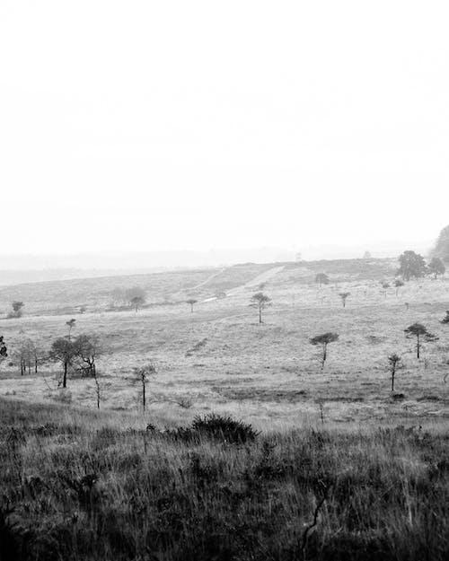 Photos gratuites de arbre, brouillard, brume