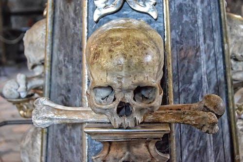 Foto stok gratis manusia, mati, Republik Ceko, tengkorak