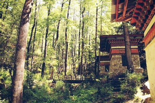 公園, 分支機構, 叢林, 和平的 的 免費圖庫相片