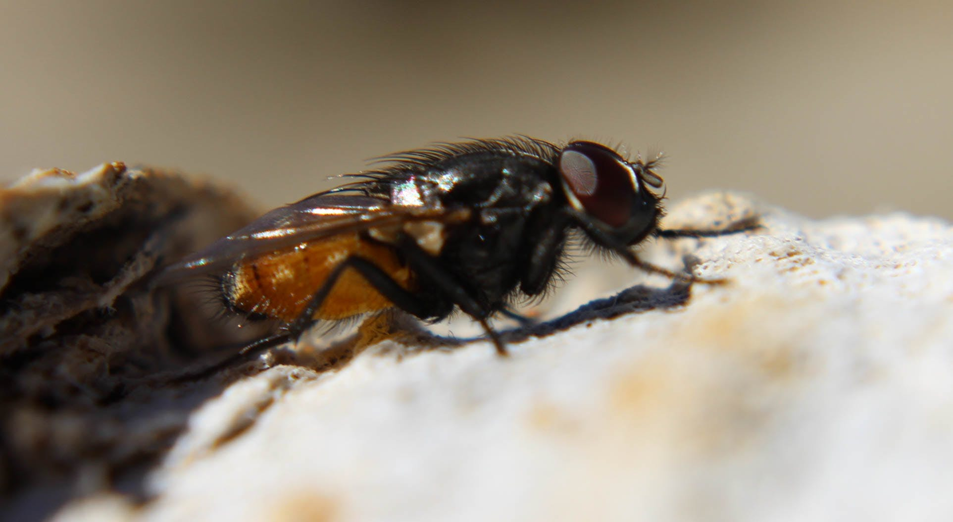 Black Fly on Rock in Macro Photography during Daytime
