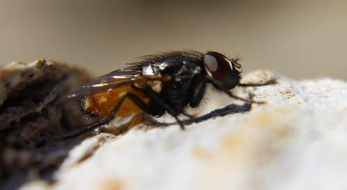 Fotos de stock gratuitas de criatura, insecto, peste
