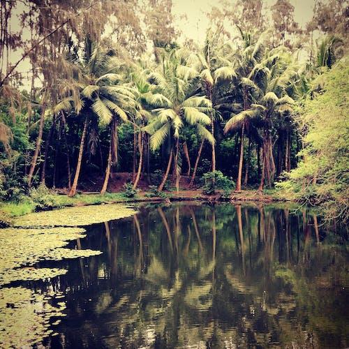Foto d'estoc gratuïta de aigua, arbres, jungla, llacuna