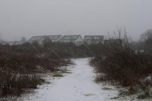 下雪, 冷, 房子 的 免費圖庫相片