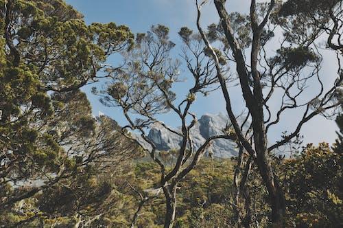 Photos gratuites de aboiement, arbre, aube