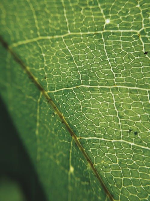 Photos gratuites de abstrait, araignée, brillant