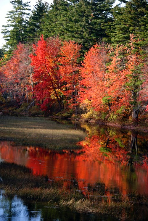 Photos gratuites de à feuilles caduques, arbre, automne