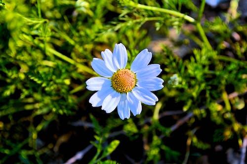 Foto stok gratis alam, berbunga, bidang, bunga