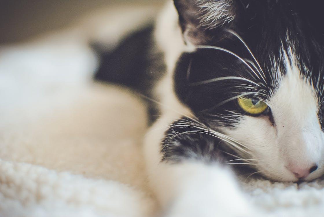 alla ricerca, animale, animale domestico