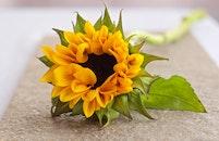 yellow, petals, flower