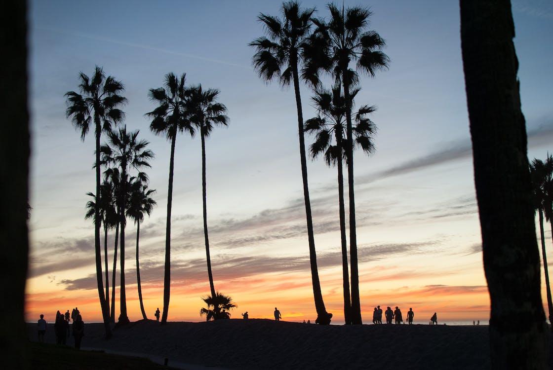 Free stock photo of beach, palm trees, sky