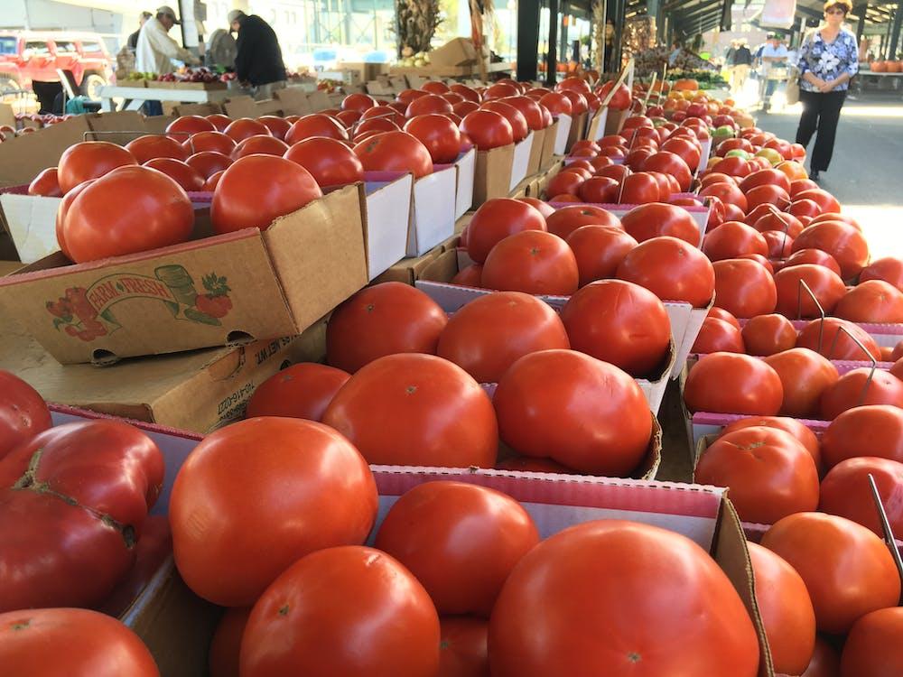 Free stock photo of farm produce, tomato