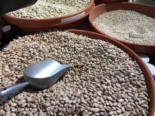 Free stock photo of bean, dry beans