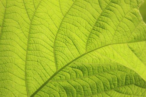 緑の葉のマイクロ写真