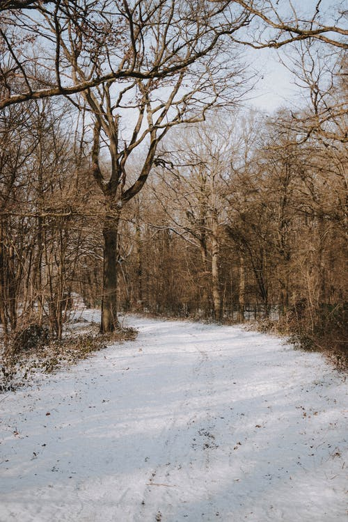 Snowy path going through tall trees with leafless branches growing in forest in suburb area on cold winter day in nature