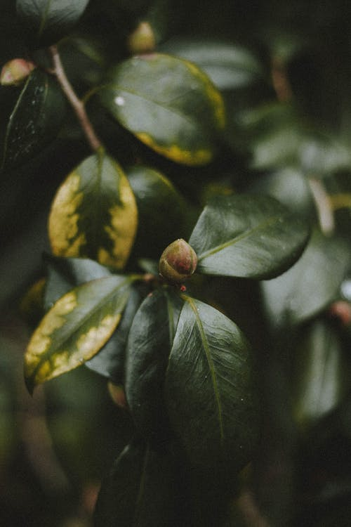 Green leaves of deciduous plant